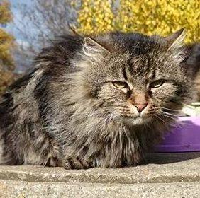 Tierheimspendenbox Katze 1