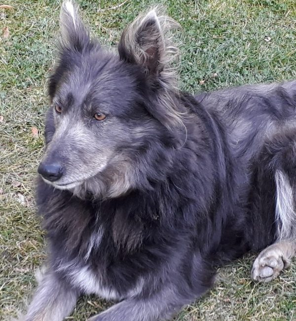 Tierheimspendenbox Hund 1
