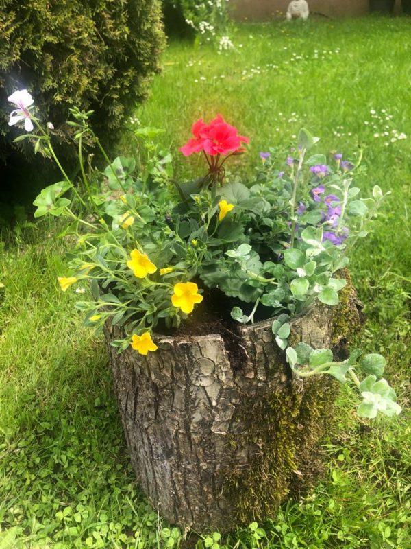 Rinden-Blumentopf mit Blumen 1