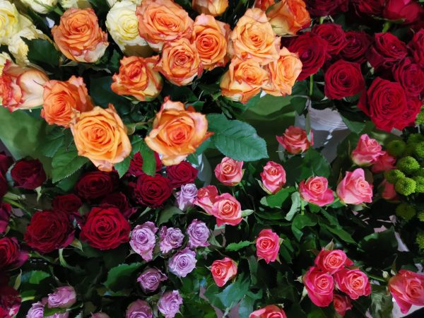 Heimische Rosen per Stück 1