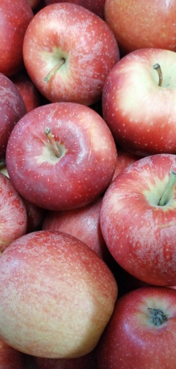 BIO-Äpfel 1