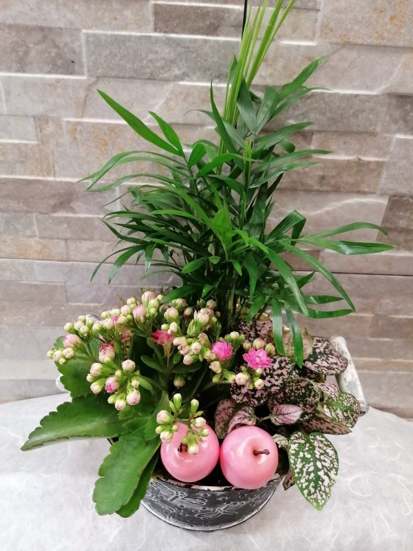 Bepflanzter Zimmertopf dekoriert 1